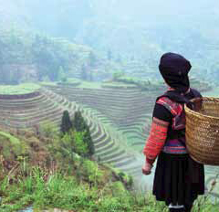 Woman Overlooking Farm Terraces