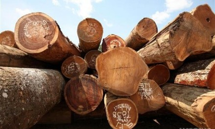 Illegal Timber Trade