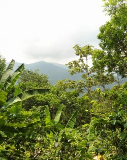 Mexico forest - forests are protected under REDD+